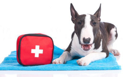 image for April is National Pet First Aid Awareness Month